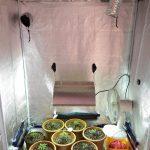 Growing Marijuana Indoors: a Beginners Guide